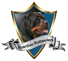 German standard rottweiler breeder Miami Florida
